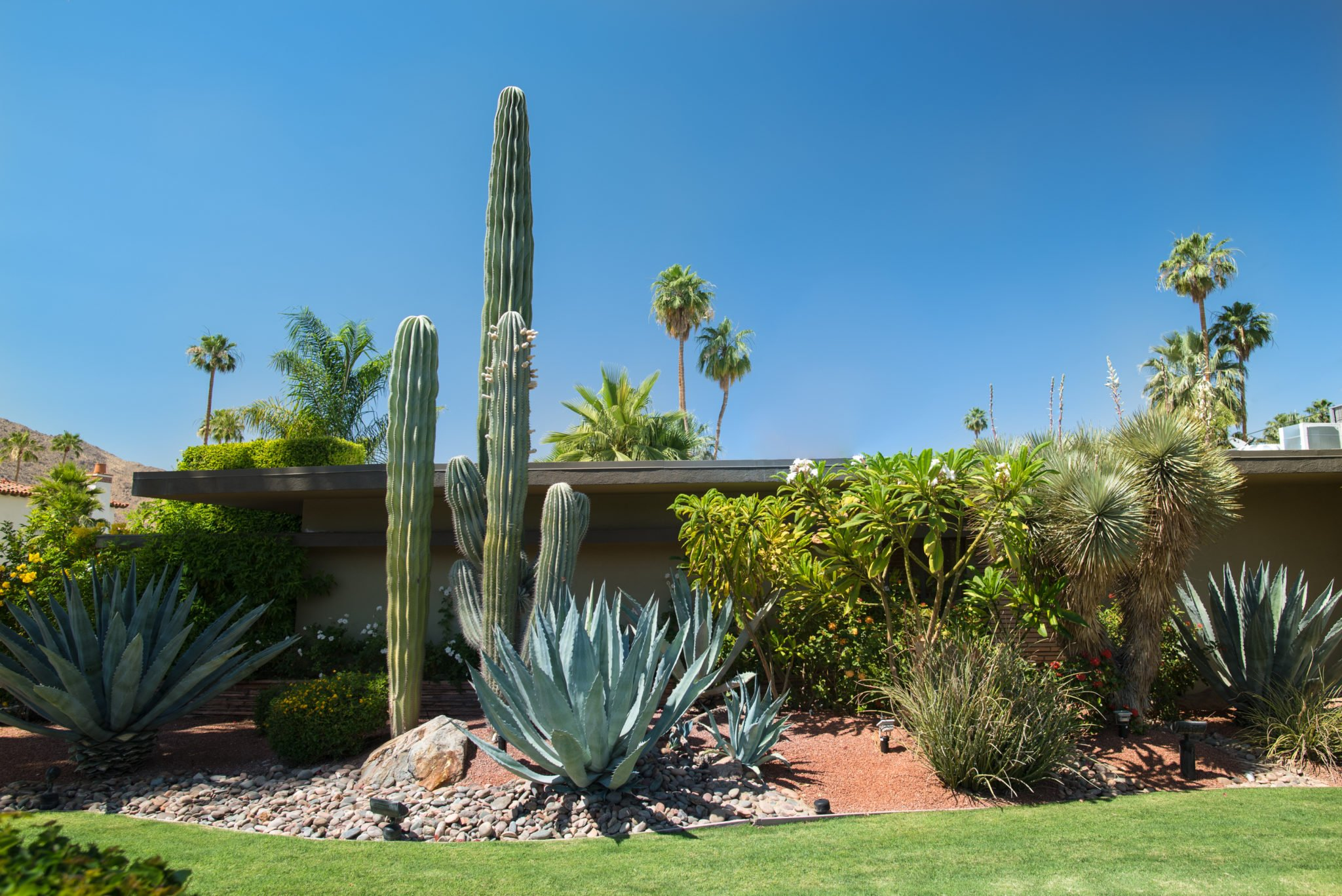 Blog Mesquite Landscaping Inc