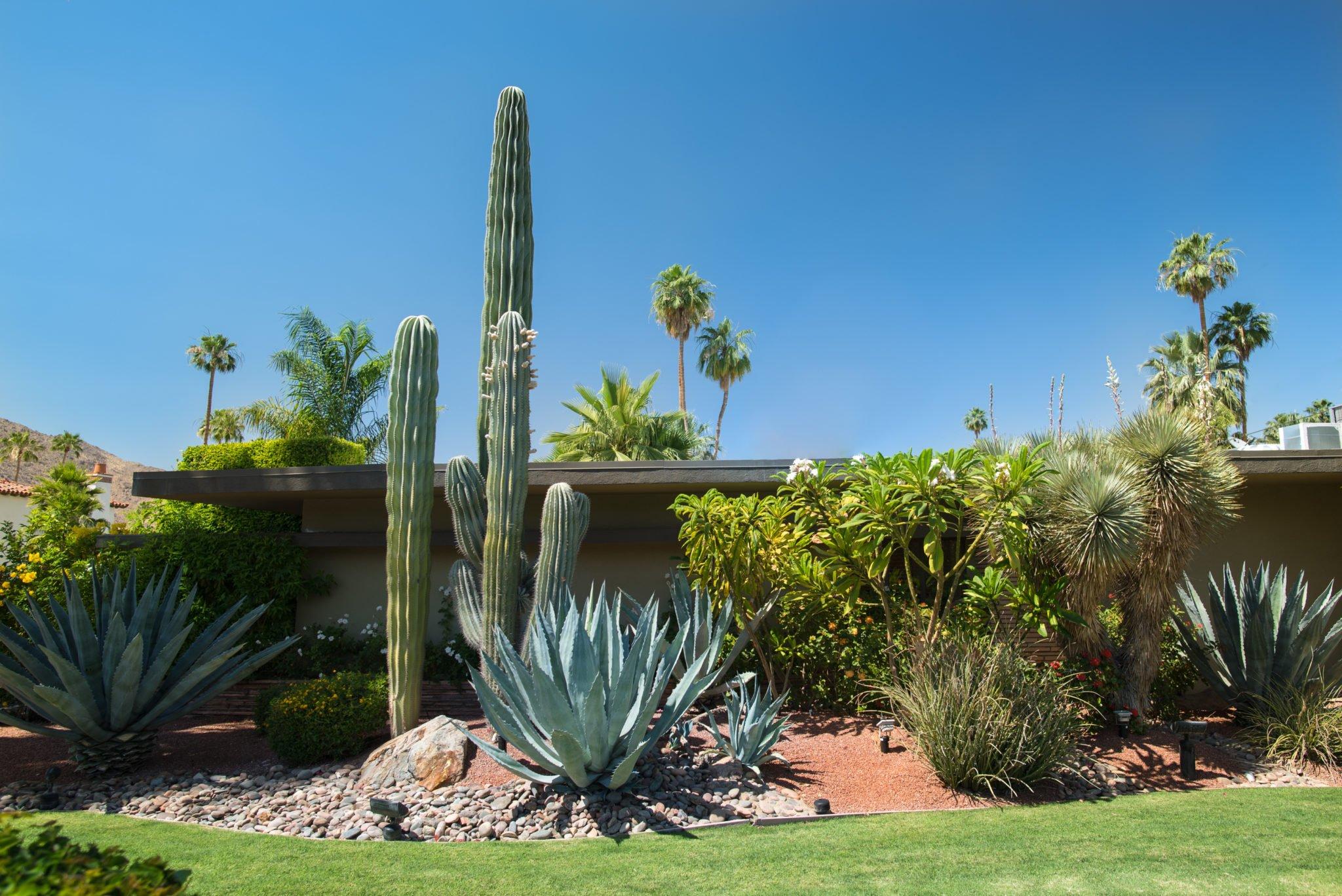 Summer Tolerant Landscaping Arizona