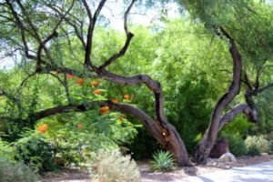a-guide-to-arizona-desert-plants-3