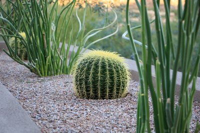 Low Maintenance Desert Plants Flowers Mesquite Landscaping Inc